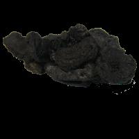 Rehmannia Root